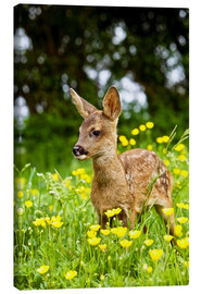 Canvas print  Roe Deer fawn in flower meadow, Normandy - Gérard Lacz
