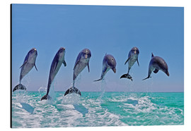 Alu-Dibond  6 dolphins jump out of the water - Gérard Lacz