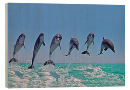 Wood print  6 dolphins jump out of the water - Gérard Lacz
