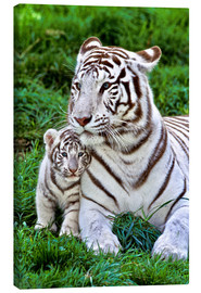 Gérard Lacz - White tiger mother with child