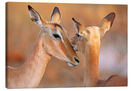 Canvas  Impala friends, South Africa - wiw