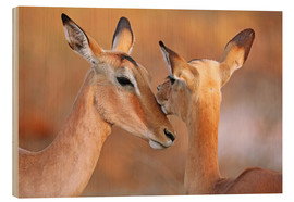 Wood print  Impala friends, South Africa - wiw