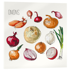 Acrylic glass  Onions collage