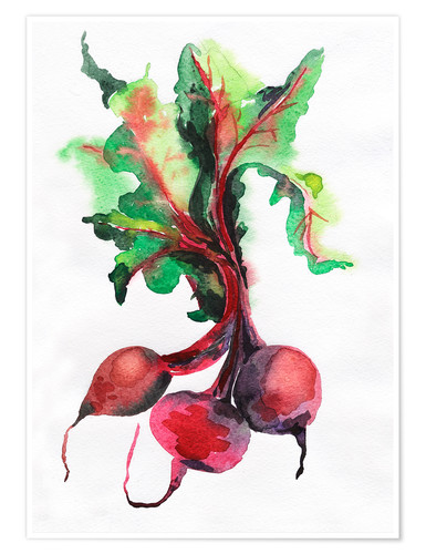 Premium poster Radish watercolor