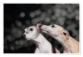 Poster Whippet friends