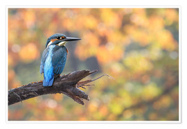 WildlifePhotography - kingfisher