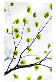 Acrylic glass  Signs of Spring - Mareike Böhmer Photography