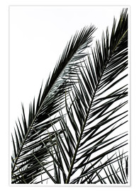 Premium poster  Palm Leaves - Mareike Böhmer Photography