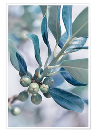 Premium poster  blue leaves