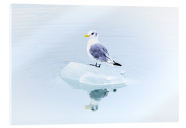 Acrylic glass  Seegull Piece of Glacier - Thomas Hagenau