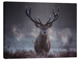 Canvas  A majestic red deer stag breathes out in the winter air - Alex Saberi