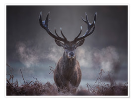 Premium poster  A majestic red deer stag breathing - Alex Saberi