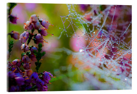 Acrylic print  Morning dew on Erica and spider web - Mark Scheper
