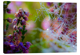 Canvas print  Morning dew on Erica and spider web - Mark Scheper