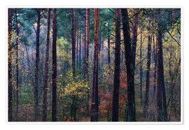 Premium poster Colorful autumn forest