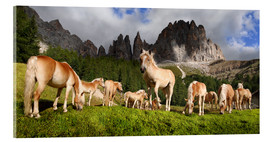 Acrylic print  Haflinger horses in a meadow in front of the Rosengarten Mountains - Michael Rucker