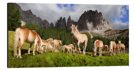 Alu-Dibond  Haflinger horses in a meadow in front of the Rosengarten Mountains - Michael Rucker