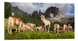 Forex  Haflinger horses in a meadow in front of the Rosengarten Mountains - Michael Rucker