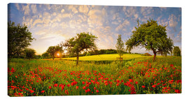 Canvas  Poppies field with fruit trees at sunset - Michael Rucker