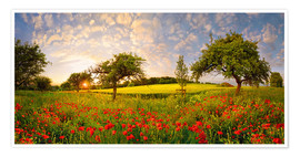 Premium poster Poppy meadow at sunset