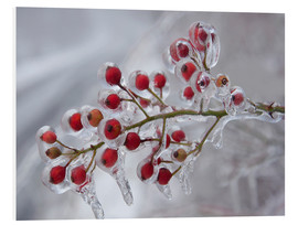 Foam board print  Rosehip Covered with Ice
