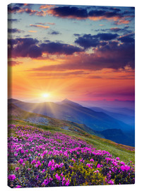 Canvas print  Rhododendron Blossom in the Carpathians