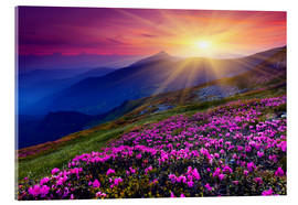 Acrylic print  Rhododendron in the Carpathians