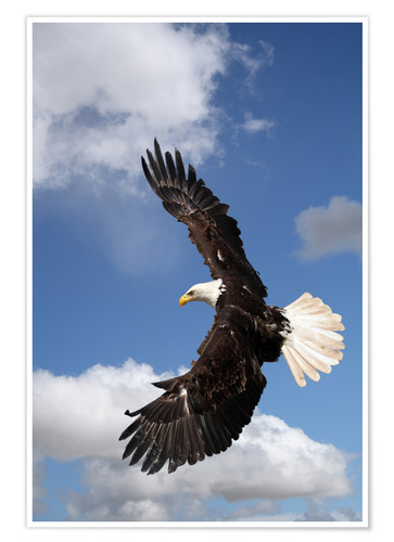 Premium poster Freedom on eagle wings