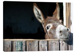 Canvas  Cute curious donkey