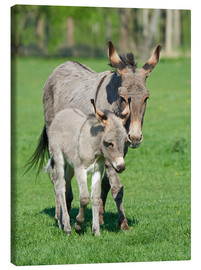 Canvas  Donkey mum and her little baby