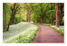 Premium poster Forest path in spring