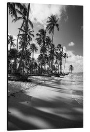 Aluminium print  Tropical palm trees on a Brazilian beach in black and white - Alex Saberi
