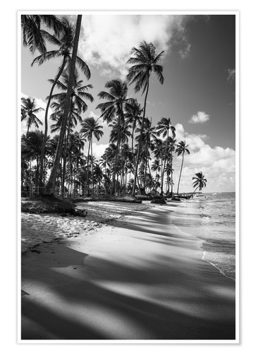 Tropical Palm Trees On A Brazilian Beach In Black And