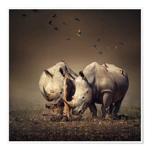 Premium poster Rhinos with birds