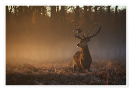 Premium poster Stag in autumn sunrise