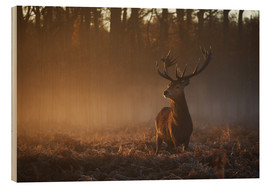 Wood print  Stag in autumn sunrise - Alex Saberi