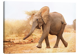 Canvas print  Happy elephant, South Africa - wiw