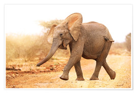 Premium poster  Happy elephant, South Africa - wiw
