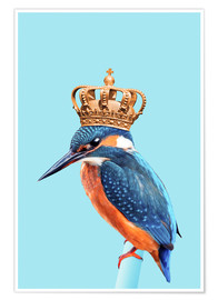 Poster  KINGFISHER - Jonas Loose