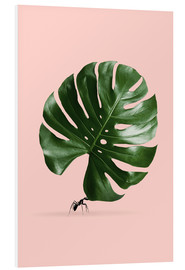Forex  MONSTERA ANT - Jonas Loose