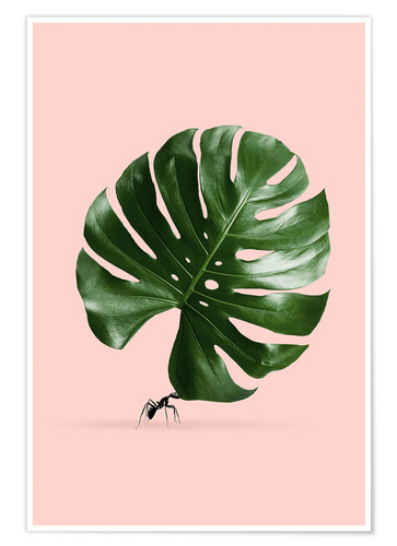 Premium poster MONSTERA ANT