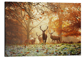 Aluminium print  Stags and deer in an autumn forest with mist - Alex Saberi