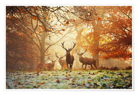 Premium poster  Stags and deer in an autumn forest with mist - Alex Saberi