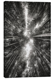 Canvas print  Bamboo forest II - Pascal Deckarm
