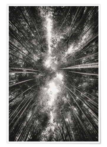 Premium poster Bamboo forest II