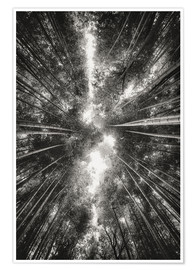 Premium poster  Bamboo forest II - Pascal Deckarm