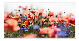 Premium poster Poppies and Cornflowers