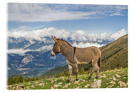 Acrylic print  Donkey on a Lonely Mountain Meadow