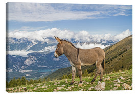 Canvas print  Donkey on a Lonely Mountain Meadow