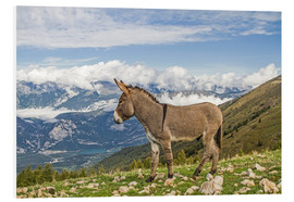 Foam board print  Donkeys on a lonely mountain meadow